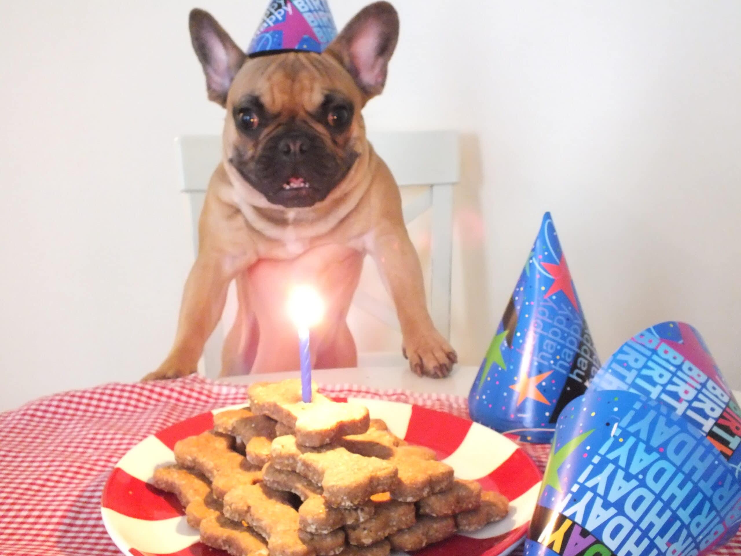 Dog Treats Candle