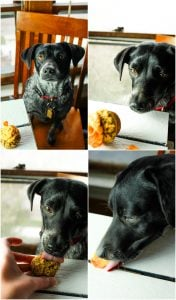 Scout loves eating these doggie cupcakes!
