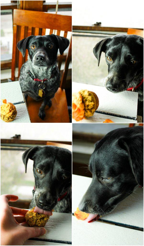 Dog Eating Cake