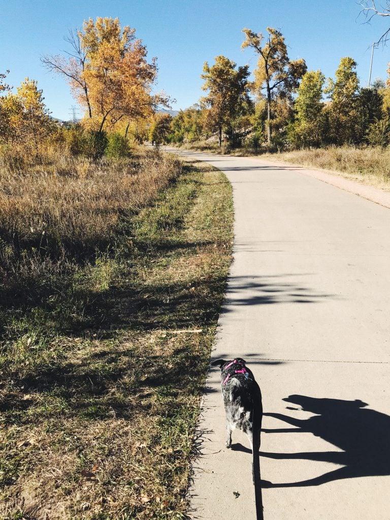 Dog walking down road